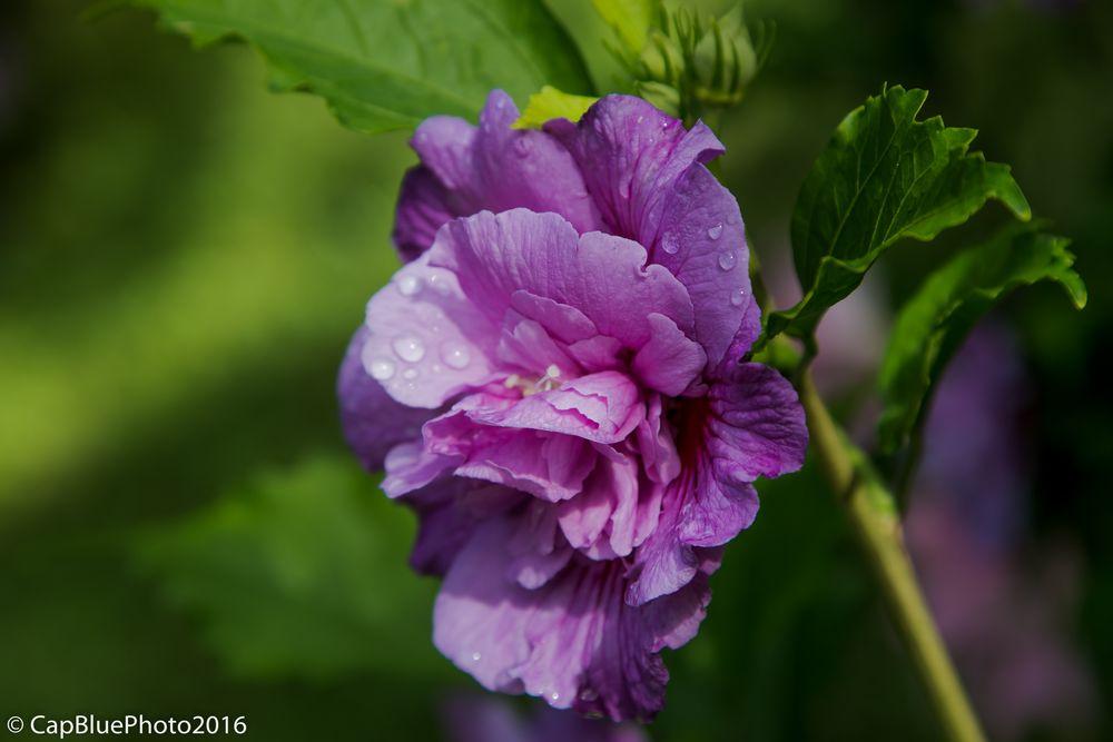 Blüten im Tal der Mühlen - Ribeira dos Caldeiroes