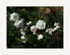 Blüten in allen Stadien