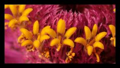 Blüten in der Blüte