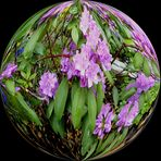 Blüten in der Kugel