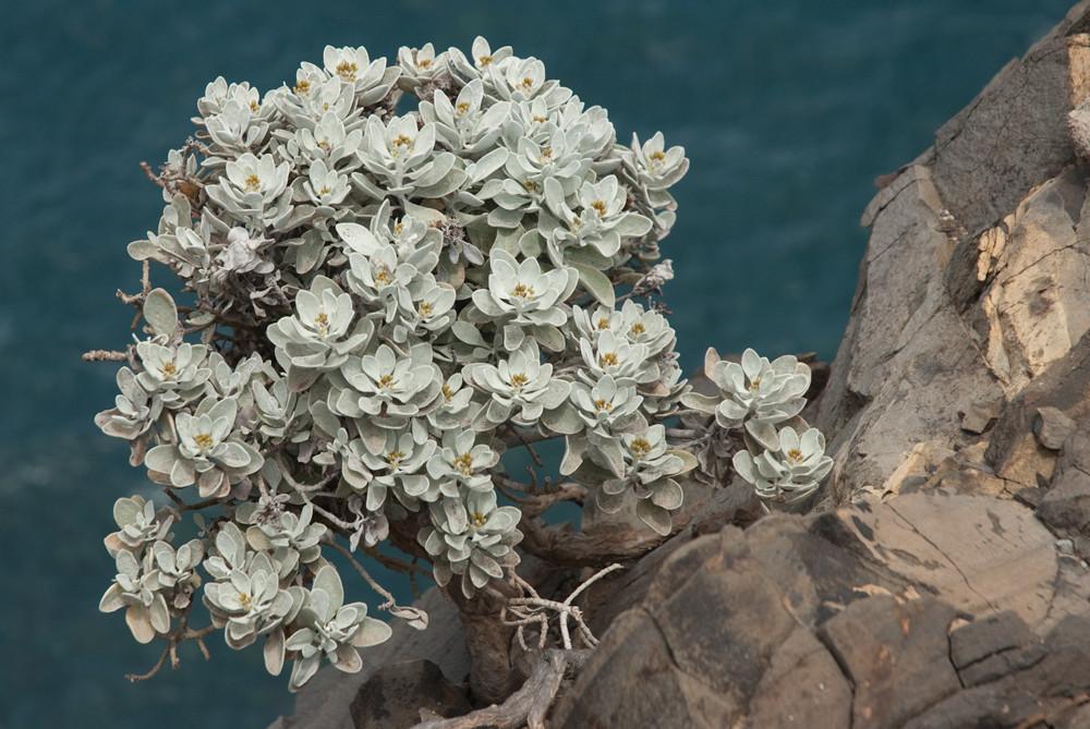 Blüten in karger Landschaft