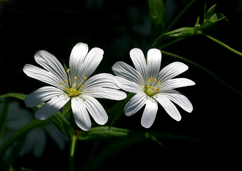 blüten in licht und schatten