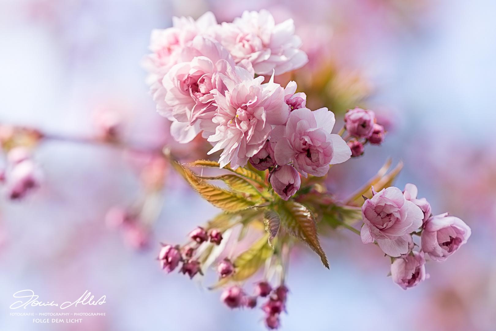 Blüten in Pastell