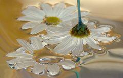Blüten in Quecksilber