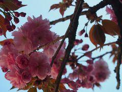 Blüten IV