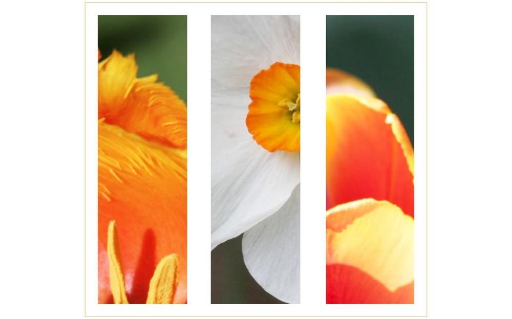 Blüten-Komposition