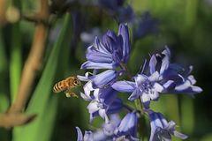 Blüten locken Bienen