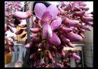 Blüten meines Orchideenbaumes