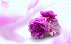 blüten mit lila wusch