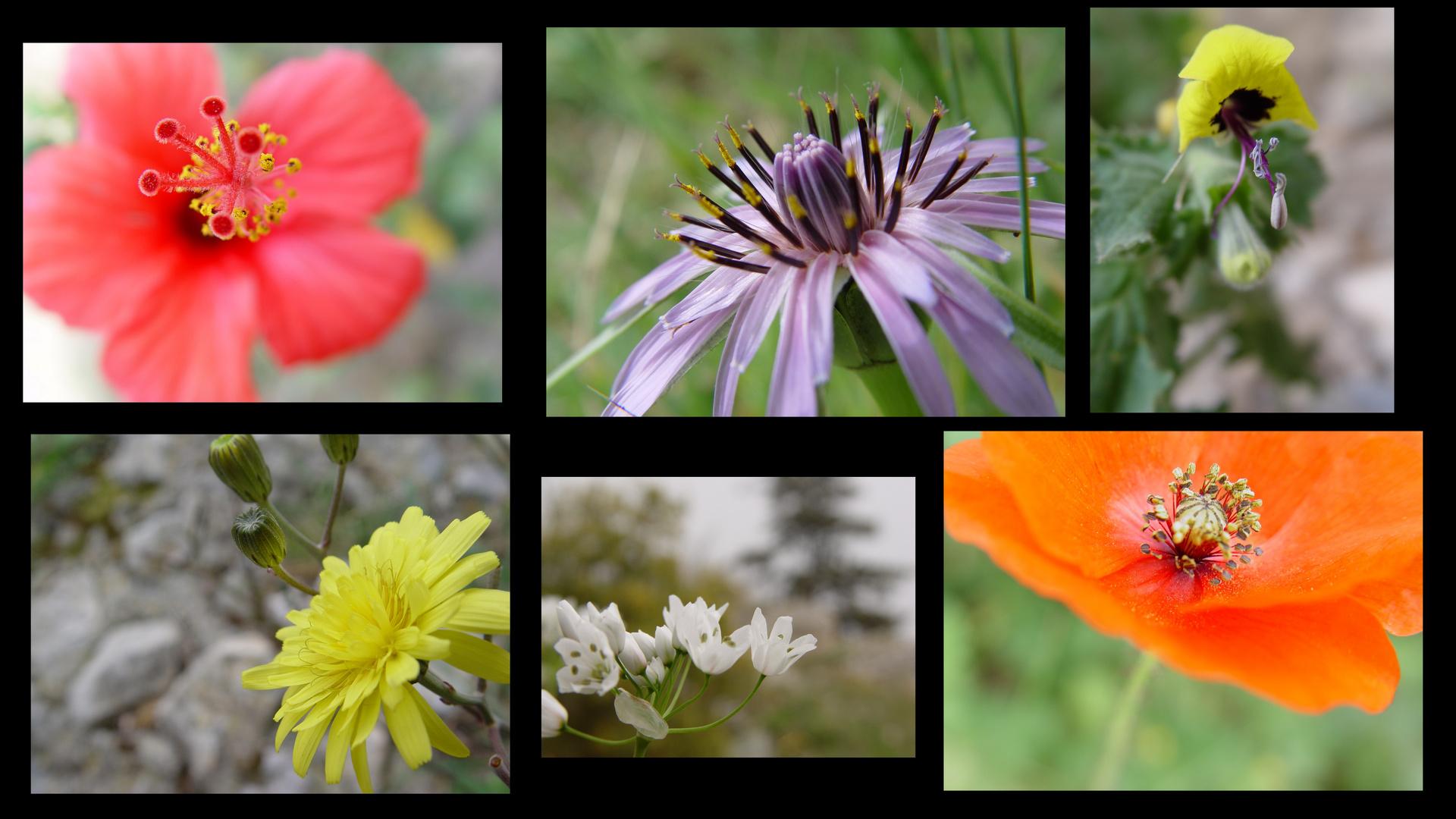 Blüten Nordzypern