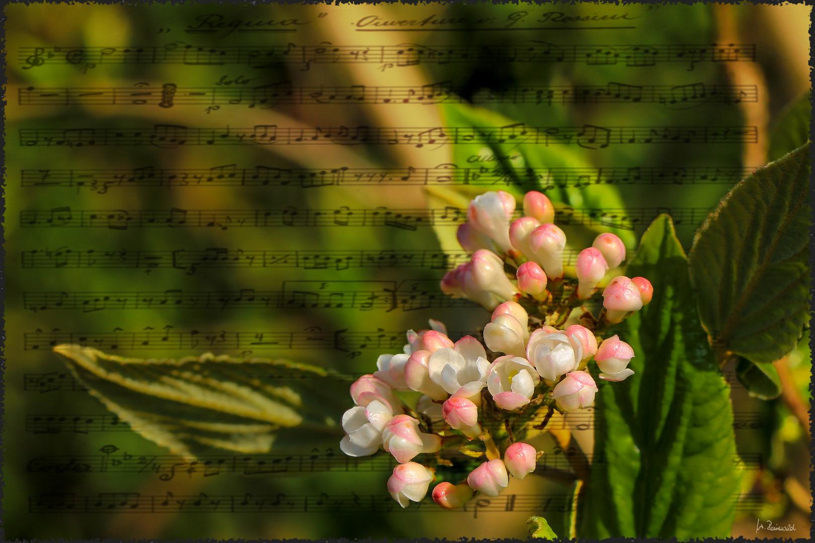 Blüten-Ouvertüre