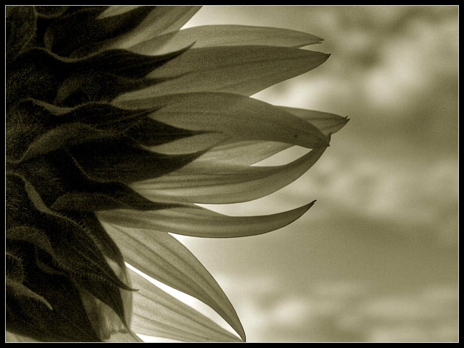 Blüten-Rausch(en) ...