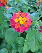 Blüten-Schnappschuss im Urlaub (Algarve/ Portugal)