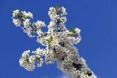 Blüten-Träume III