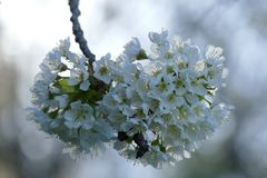 Blüten-Träume IV