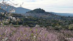 Blüten- (Traum) Landschaft I