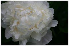 Blüten - TüTü