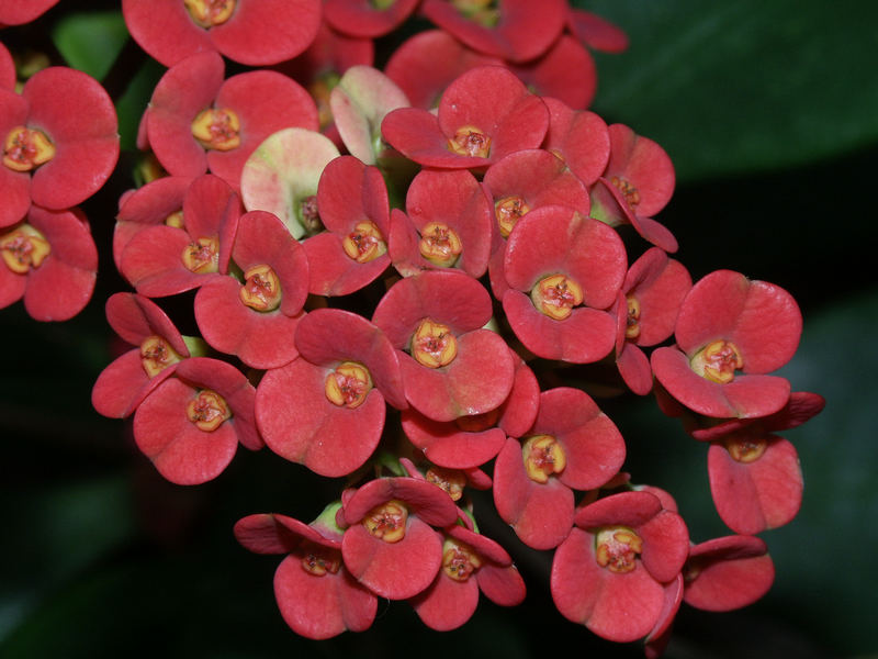 Blüten über Blüten....