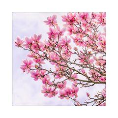 Blüten über Blüten