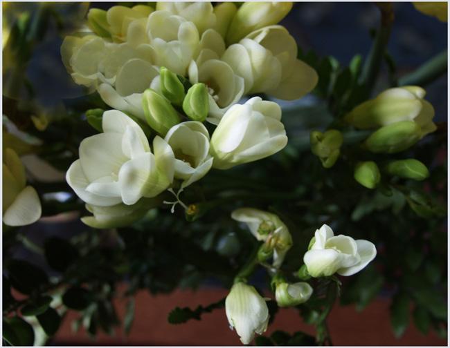 Blüten über gedämpften Farben
