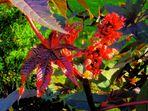 Blüten und Blätter im Sonnenlicht