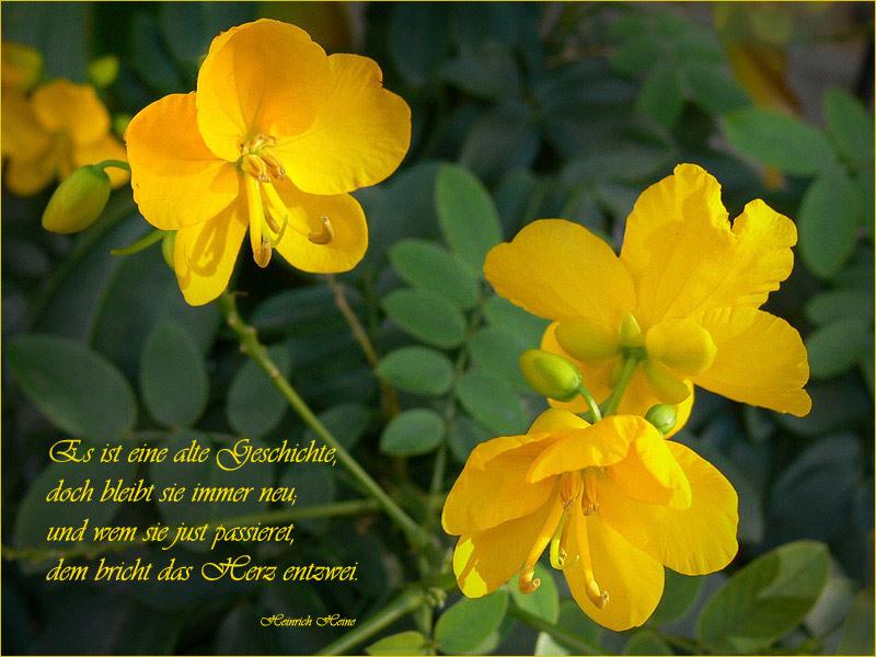 Blüten und Lyrik ( 33 )