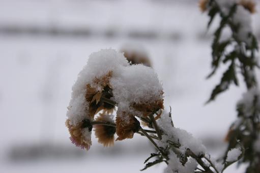 Blüten unter Schnee