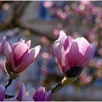 Blüten voll Licht