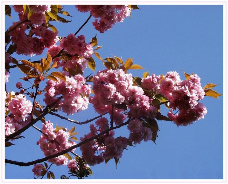Blüten vor dem grossen Regen...