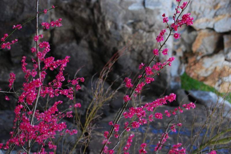 Blüten vor einer Felswand.
