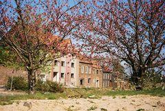 Blüten vor Ruinen des Geisterdorfs Inden / Tree blossom confronting ruins of ghost town Inden