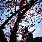 Blüten vor Turm  P20-20-col