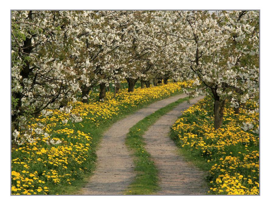 Blüten-Weg