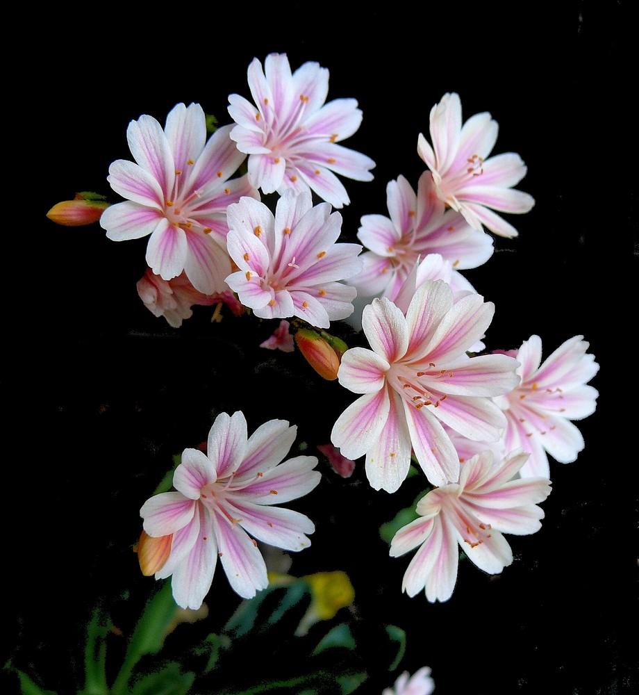 bl ten wie gemalt foto bild pflanzen pilze flechten bl ten kleinpflanzen. Black Bedroom Furniture Sets. Home Design Ideas