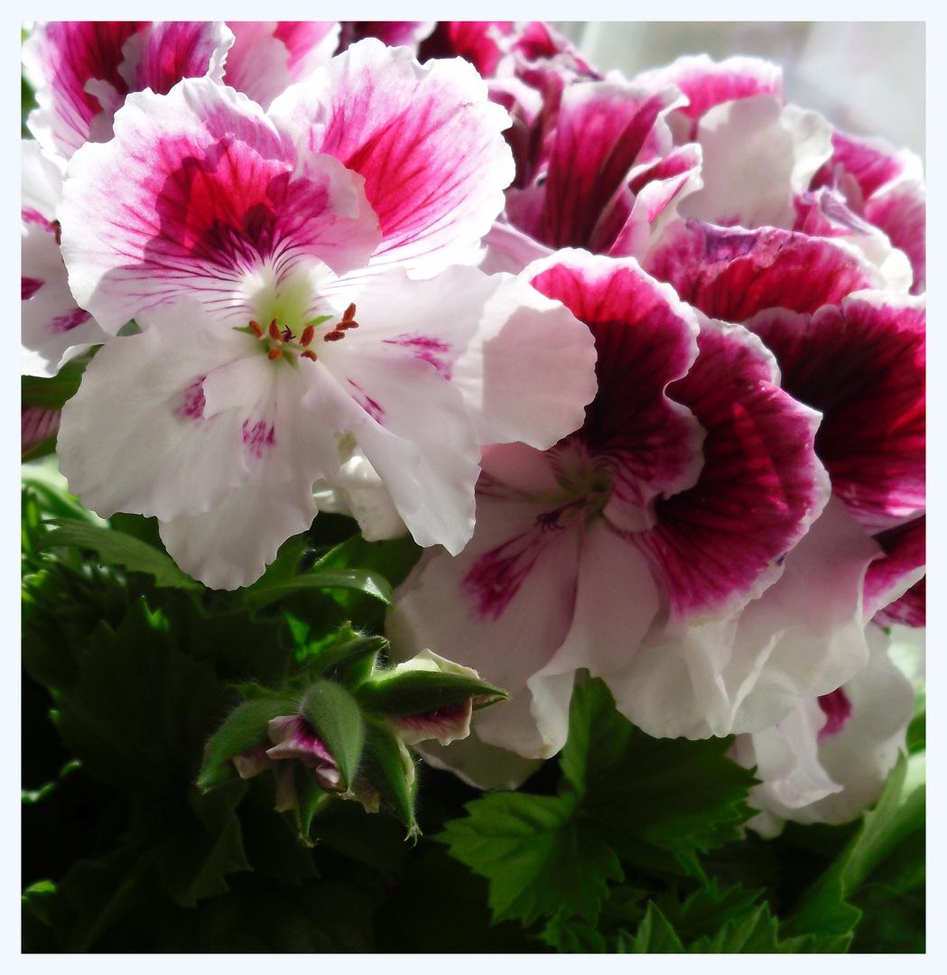 bl ten wie gemalt foto bild pflanzen pilze flechten zimmerpflanzen blumen und bl ten. Black Bedroom Furniture Sets. Home Design Ideas