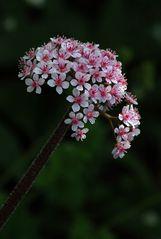 Blüten wie Porzellan - aber echt