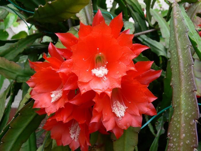 Blüten, Wunder der Natur