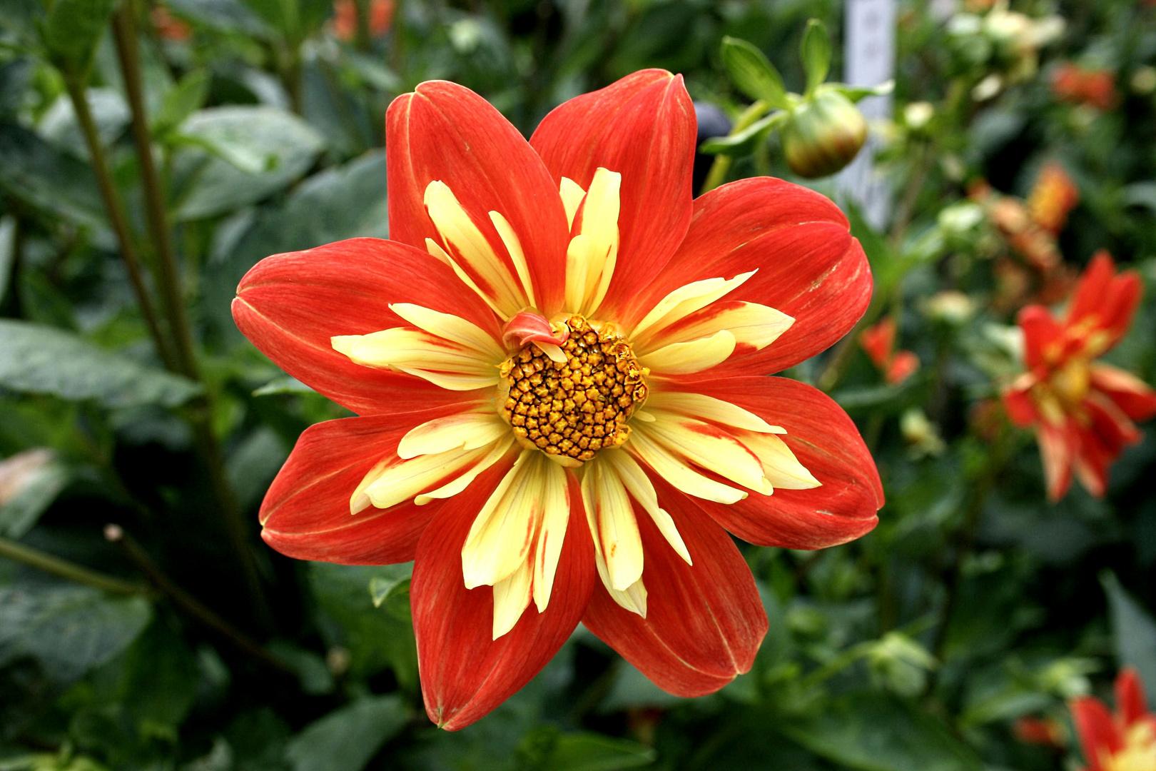 Blüten z