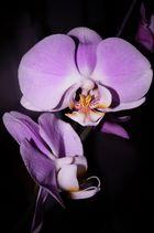 Blüten zauber