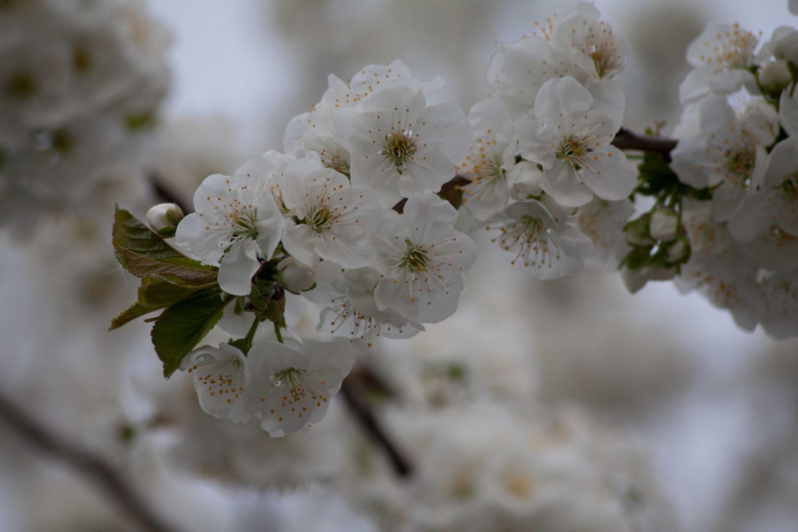 Blüten_1