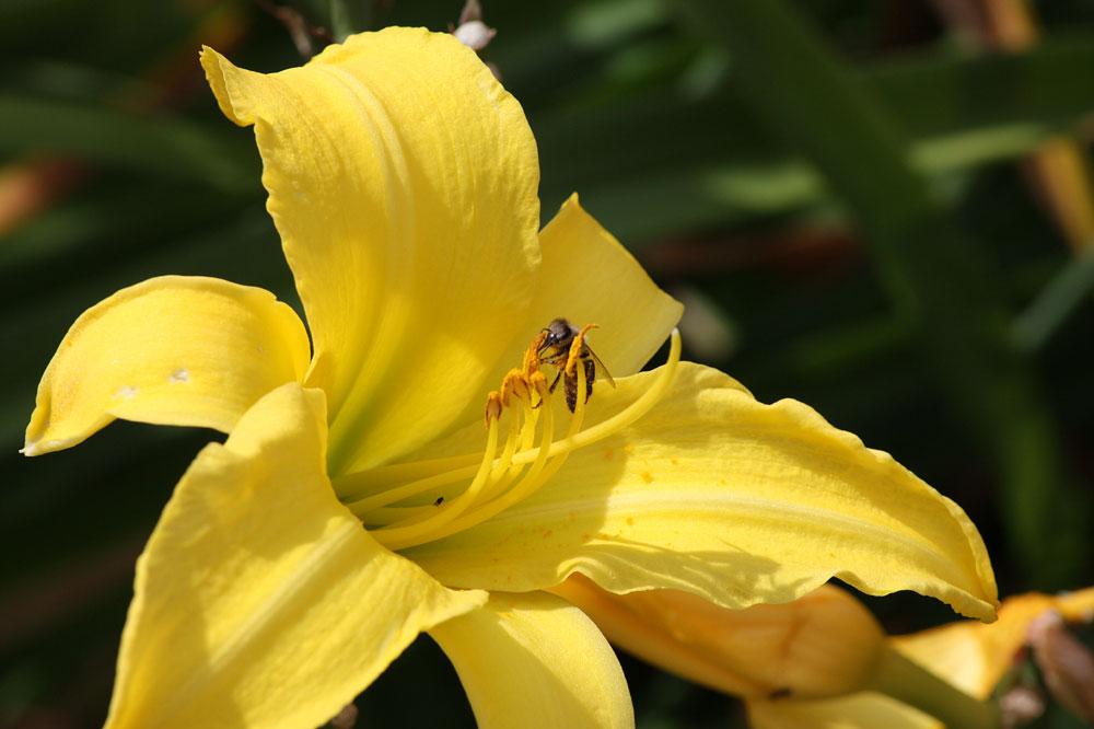 Blütenakrobatik
