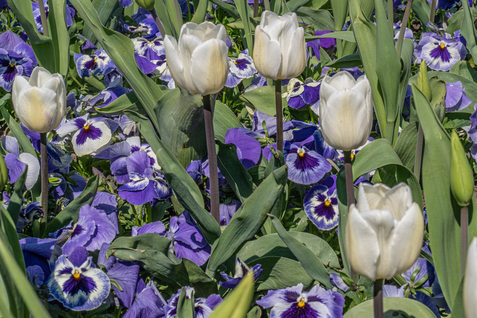 Blütenarrangement