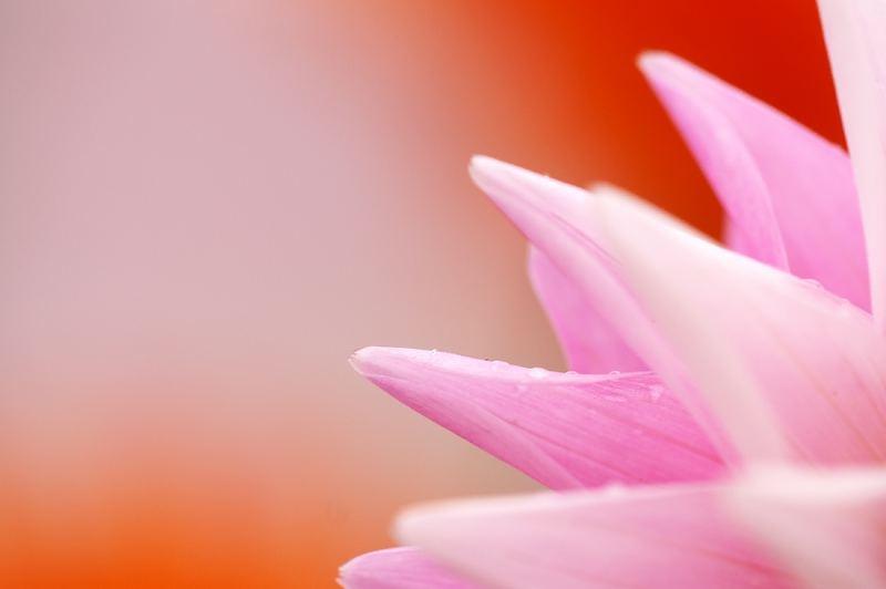 Blütenaufgang