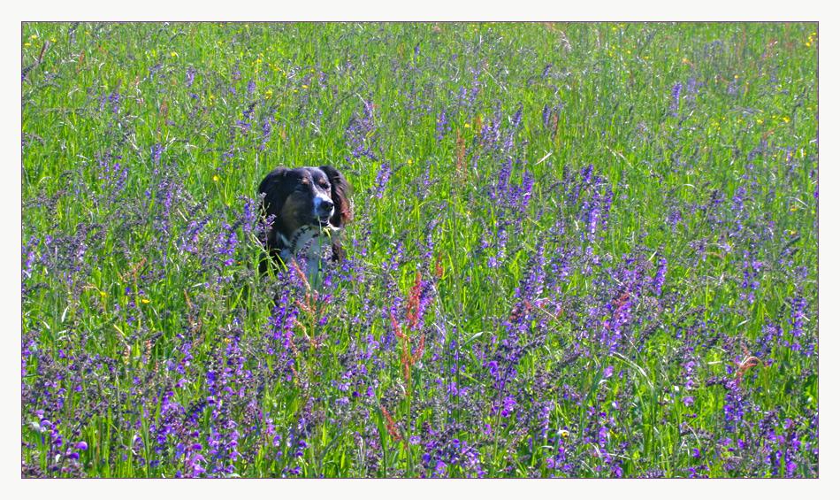 Blütenbad für Laika