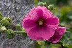 Blütenbätter