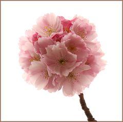 Blütenball