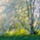 Blütenbaumwischer