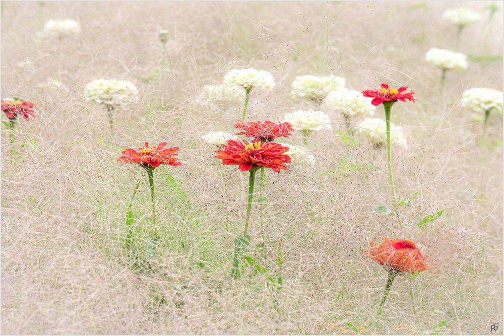 Blütenbett