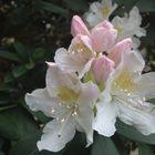 Blütenbilder 4