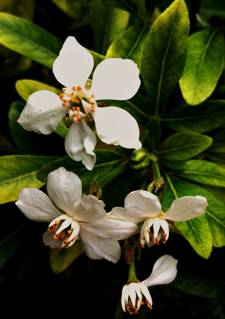 Blütenbilder 41